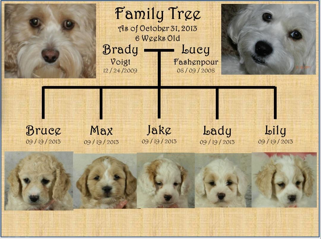 October 31 2013 Latest Family Tree